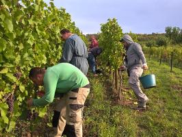 Les équipes du domaine dans les Vignes du Stierkopf